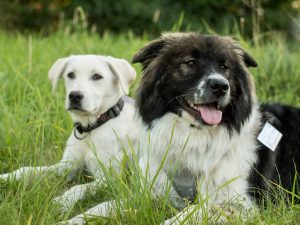 Unsere Therapiehunde
